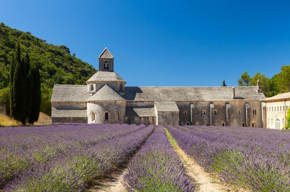 Lavender, Abbaye de Sénanque, Provence, France