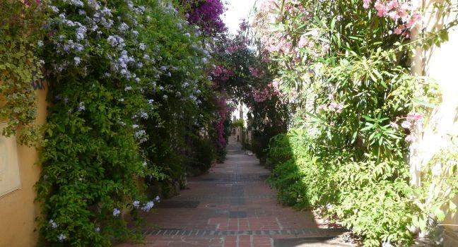 Path, Flowers, Commune Libre du Safranier, The French Riviera, France