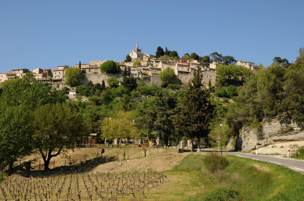 Vinyard, Bonnieux, Provence, France