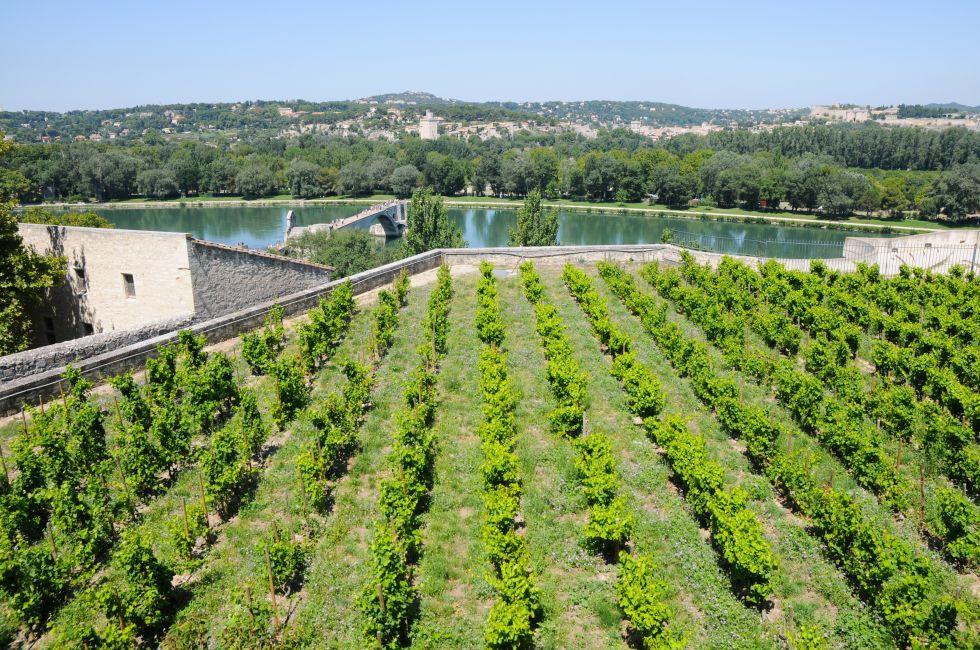 Vineyard, Rocher des Doms, Pont Saint-Benezet, Avignon, Provence, France