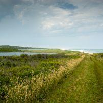 Landscape, Coastline, Chilmark, Martha's VIneyard, Massachusetts, USA