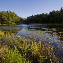 Pond, Wild Acres Park, Pittsfield, Massachusetts