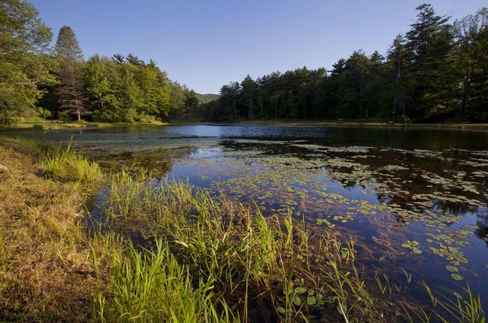 Pond, Wild Acres Park, Pittsfield, Massachusetts