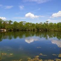 Oasis, Big Pine Key, The Florida Keys, Florida, USA