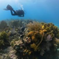 Scuba Diver, Key Largo, The Florida Keys, Florida, USA