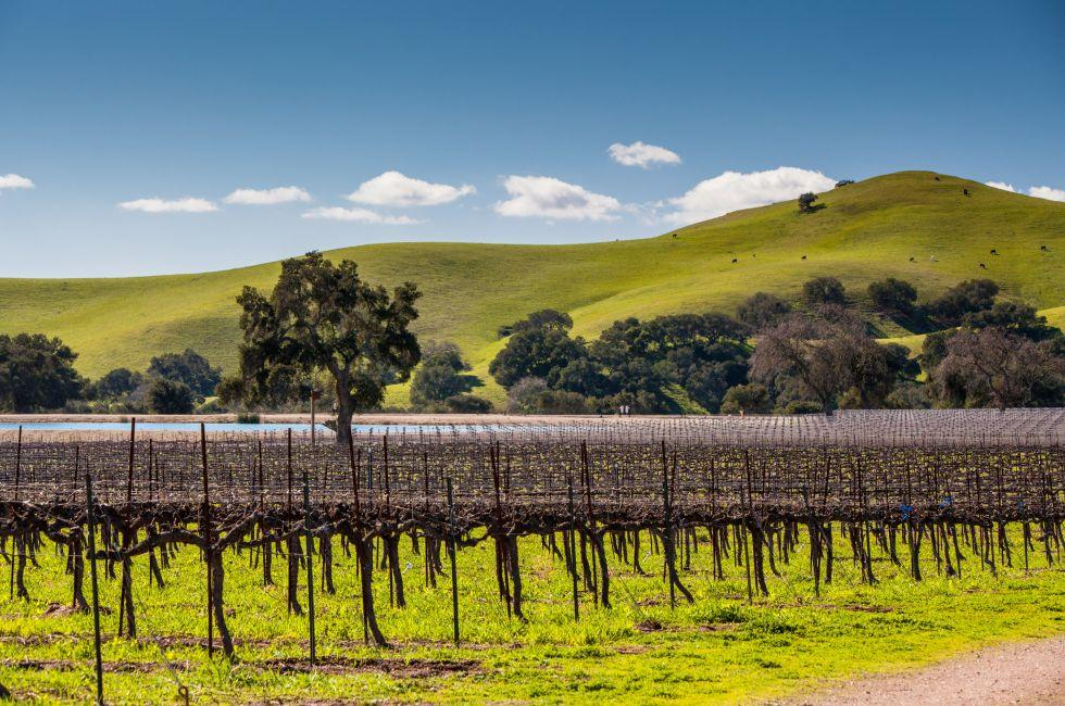 Vineyards, Landscape, Los Olivos, Santa Barbara and the Central Coast, California, USA