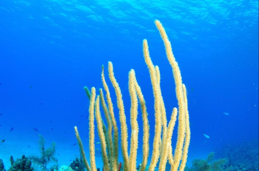 Soft Corals, Grand Cayman, Caribbean