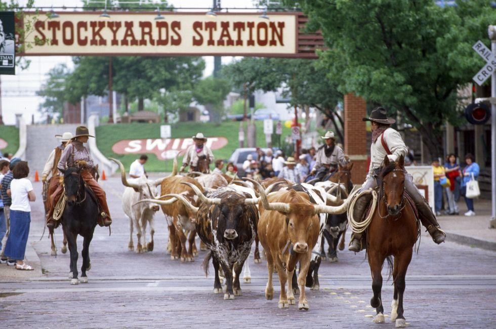 Cattle Drive, Fort Worth Stockyards, TX longhorns Fort Worth, Texas