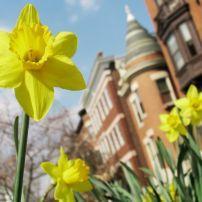 Daffodil, Apartments, Baltimore, Maryland
