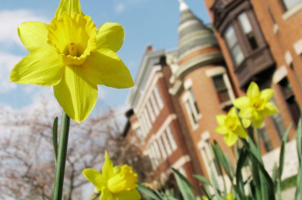 Daffodil, Apartments, Baltimore, Maryland