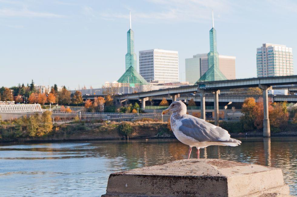 Seagull, Waterfront, Portland, Oregon