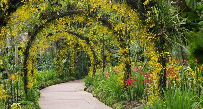 Path, Singapore Botanic Gardens, Holland Village, Dempsey Hill and the Botanic Garden, Singapore, Asia.