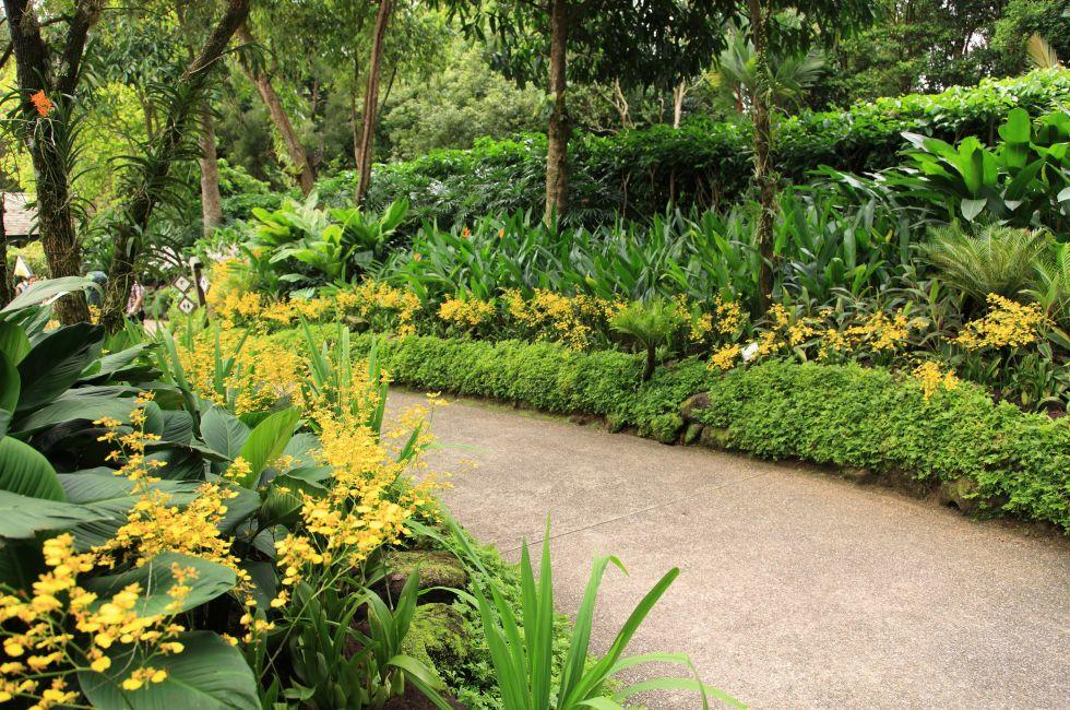 Trail, National Orchid Garden, Singapore Botanical Gardens, Holland Village, Dempsey Hill and the Botanic Garden, Singapore, Asia.