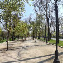 Trees, Parque Forestal, Santiago, Chile