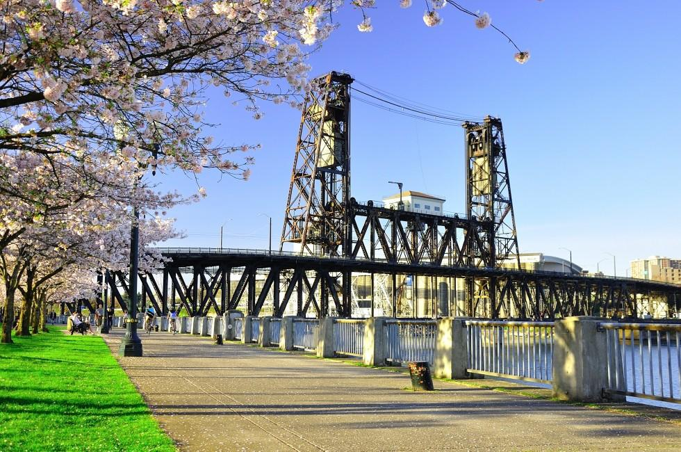 Waterfront, Cherry Blossoms, Willamette River, Portland, Oregon
