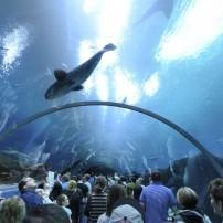 Georgia Aquarium, Atlanta, Georgia, USA