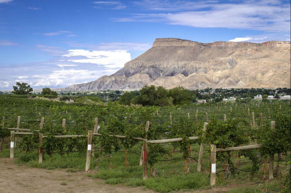 Palisades Colorado vineyard, Colorado, USA