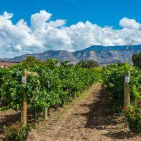 Vineyard, Palisade, Steamboat Springs and Northwest Colorado, Colorado, USA, North America