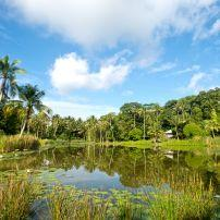 Pond, Pulau Ubin, Singapore