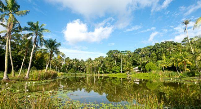 Pond, Rainforest, Pulau Ubn, Sentosa Island, Singapore, Asia.