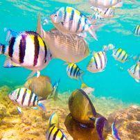Fish, Kauai, Hawaii, USA.