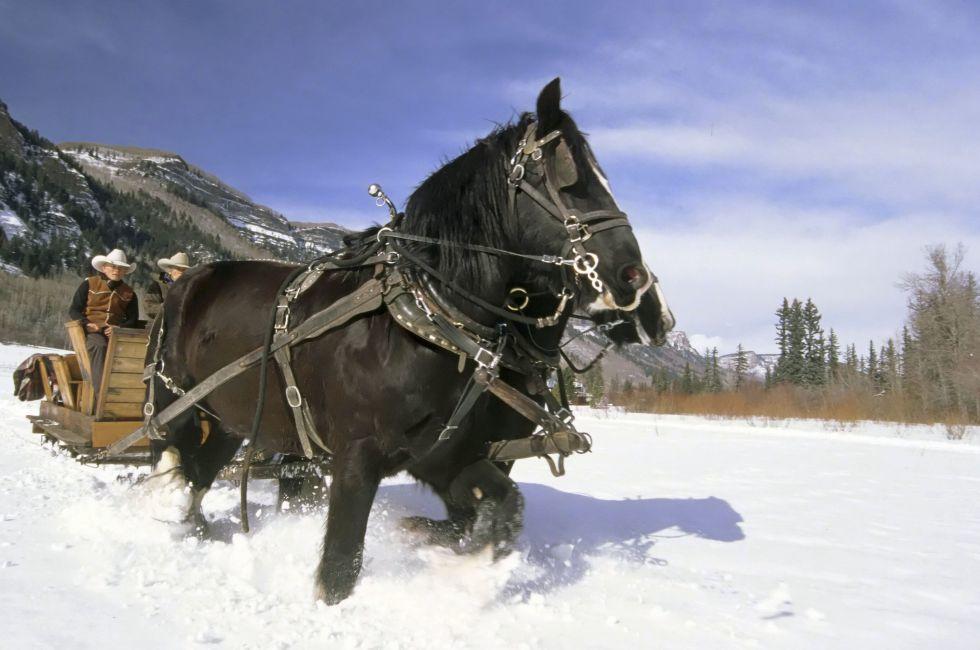 Sleigh riding, Rapp Ranch, Durango, Colorado