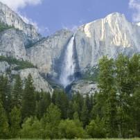 Forest, Yosemite Falls, Yosemite National Park, California, USA