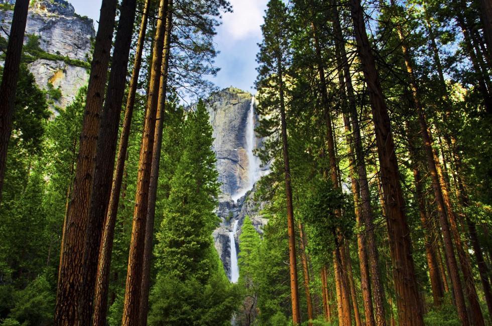 Forest, Yosemite Waterfalls, Yosemite National Park, California, USA