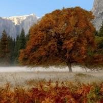 Landscape, Tree, Autumn,  Yosemite National Park, California, USA