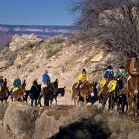 Mule Train, Grand Canyon, Arizona, USA
