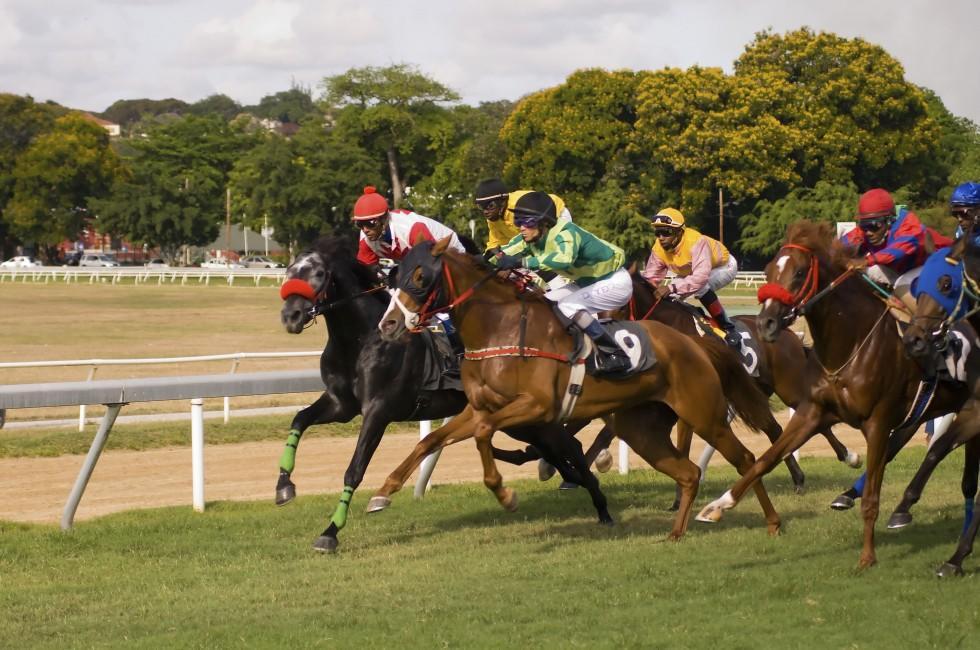Horse Race, Barbados, Caribbean