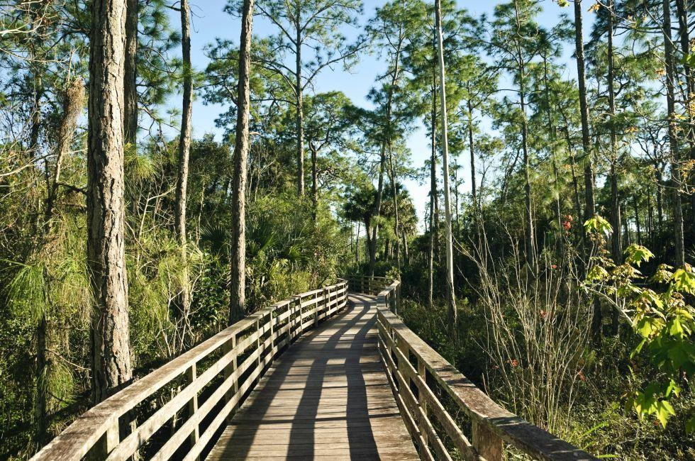 Boardwalk, Corkscrew Swamp Sanctuary, The Everglades, The Lower Gulf Coast, Florida, USA