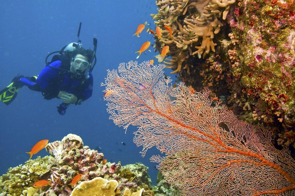 Scuba Diver, Coral, Great Barrier Reef, Australia