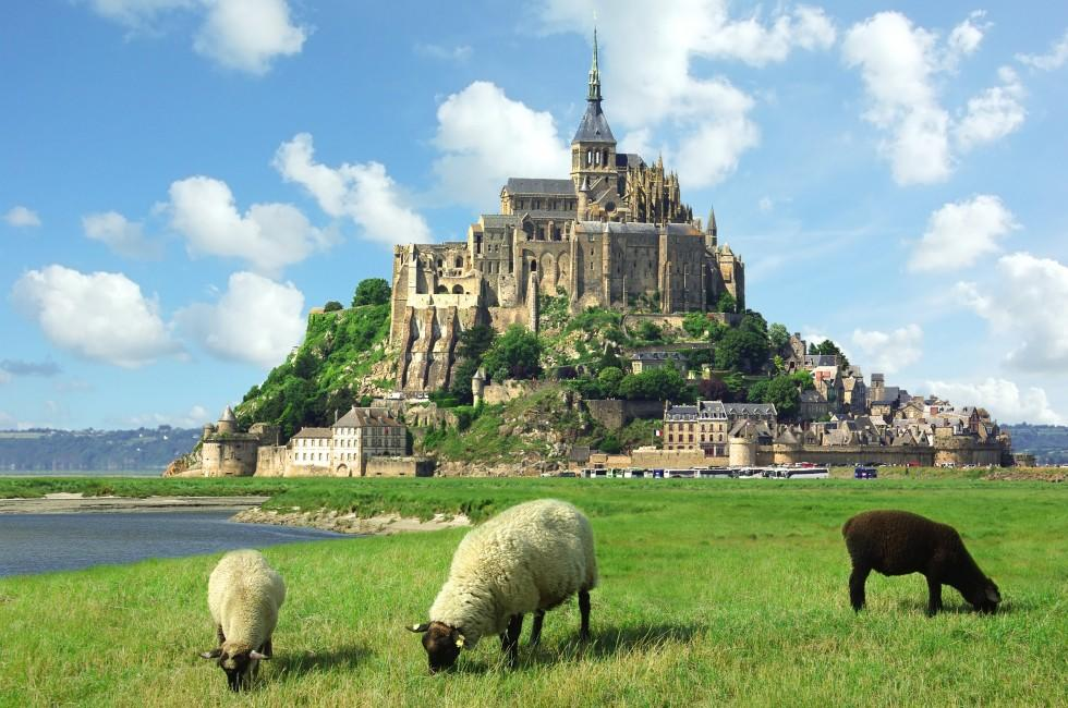 Sheep, Mont Saint Michel, Normandy, France