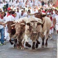 Bulls, Pamplona, Bilbao and the Basque Country, Spain