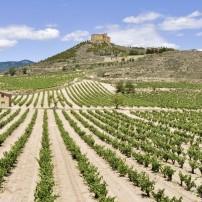 Vineyard, Davalillo Castle, La Rioja, Bilbao and the Basque Country, Spain