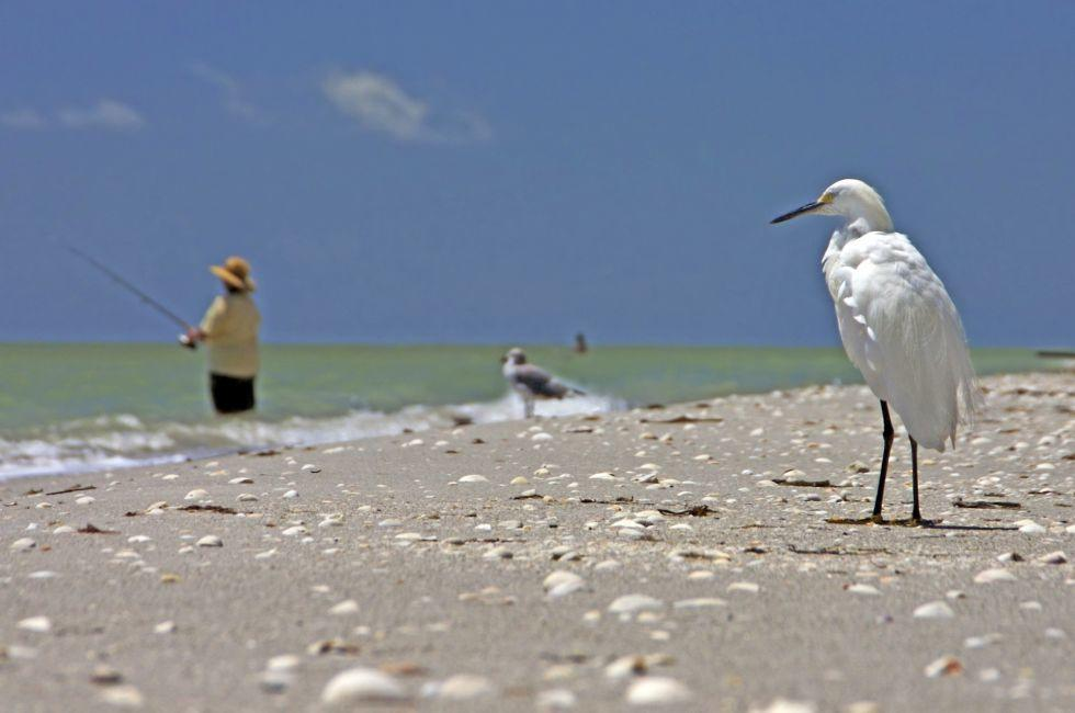 Sanibel Island, Florida.
