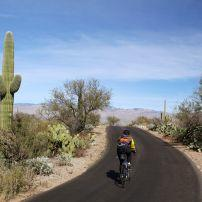 Biker, Cactus Forest Drive, Saguaro National Park, Arizona