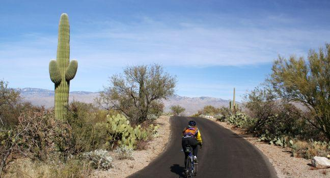 Saguaro National Park Travel Guide Expert Picks For Your Saguaro National Park Vacation Fodor S