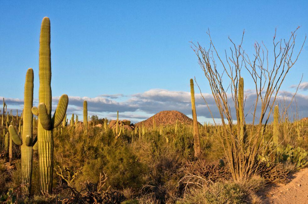 Landscape, Saguaro National Park, Arizona, USA