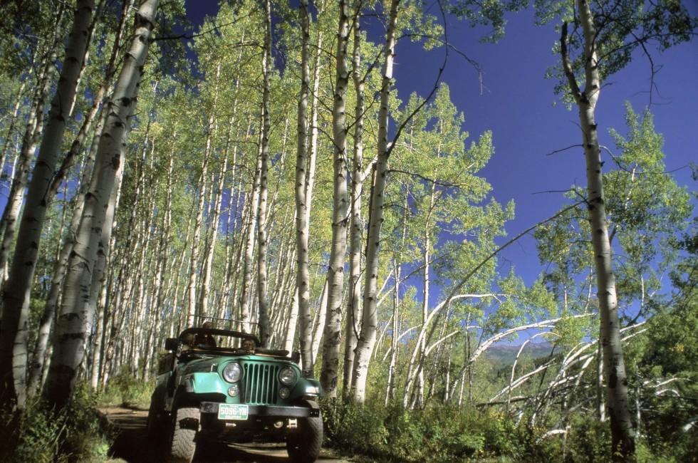 Jeep, Off Road, Aspen Forest, Aspen, Colorado