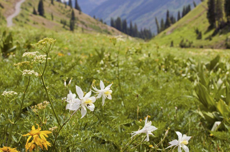 Mountains, Crested Butte, Colorado