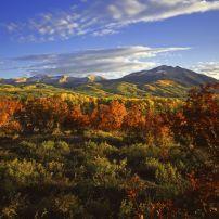 Foliage, Landscape, Black Canyon of the Gunnison National Park, Colorado, USA
