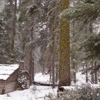 Gamlin Cabin, Kings' Canyon National Park, California, USA