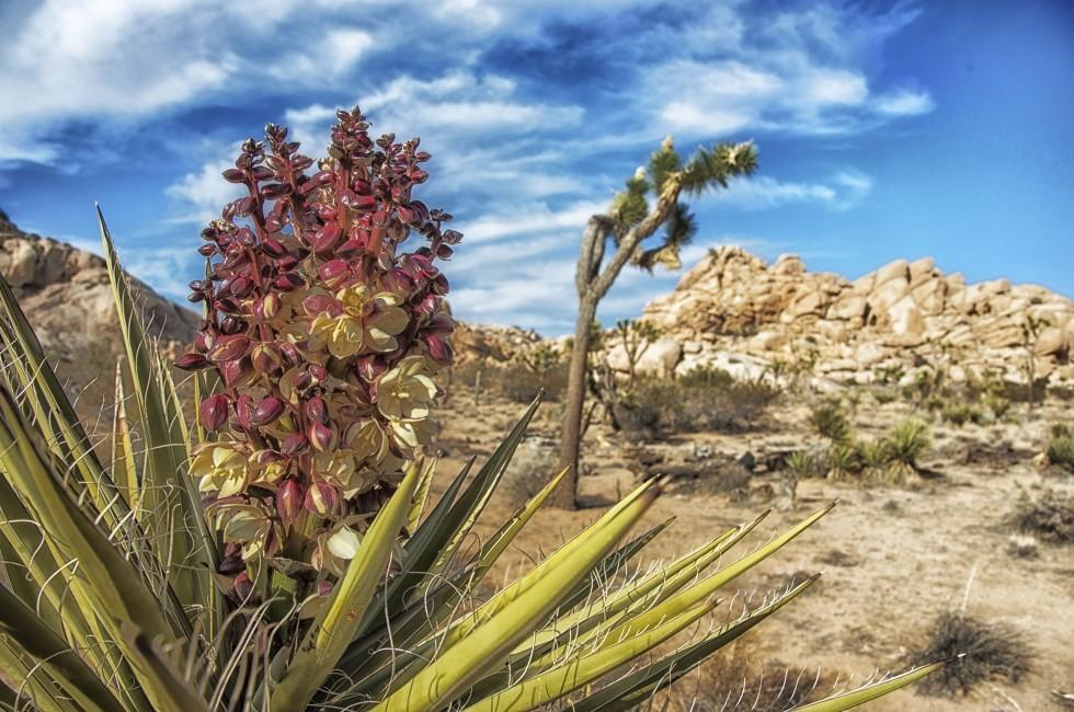 Desert, Joshua Tree National Park, California, USA