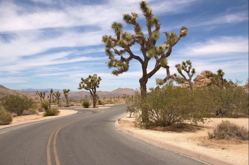 Road, Joshua Tree National Park, California