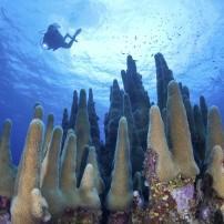 Diver, Coral Reef, Grand Cayman, Caribbean