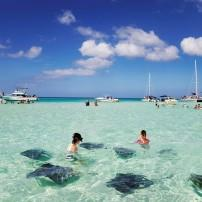 Stingrays, Sandbar, Grand Cayman, Cayman Islands, Caribbean