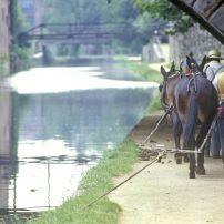 Horses, National Historical Park, C&O Canal, Washington, D.C., USA