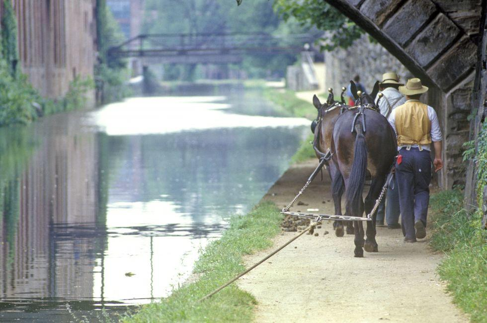 Horses, National Historical Park, C&O Canal, Washington, D.C., USA